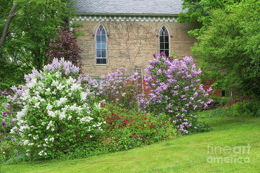Churchyard Lilacs Photograph