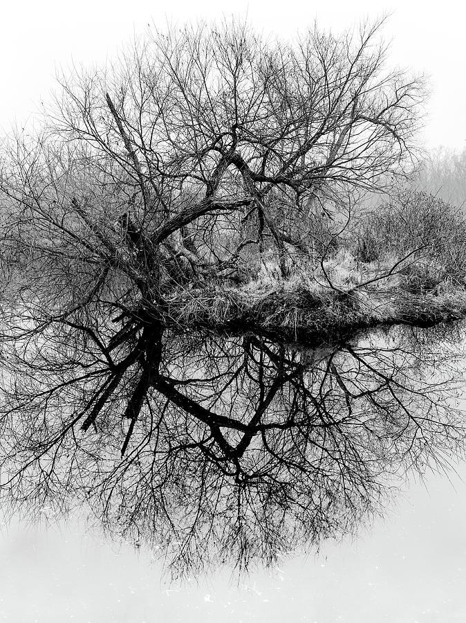 Circle Tree Photograph