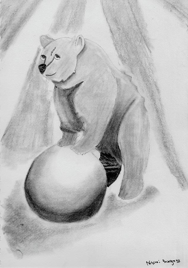 Cirus Bear  by Naomi Burgess