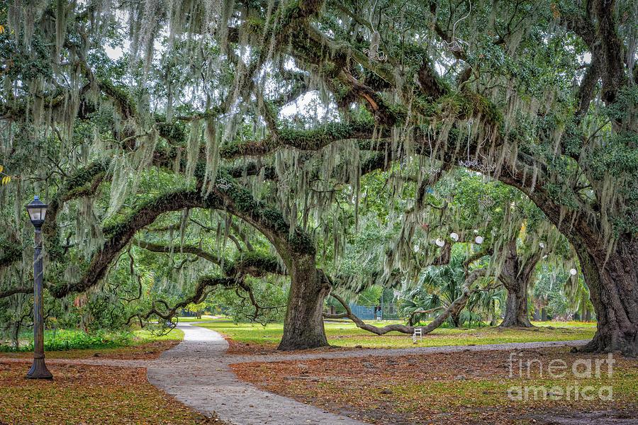 City Park New Orleans Oaks by Kathleen K Parker