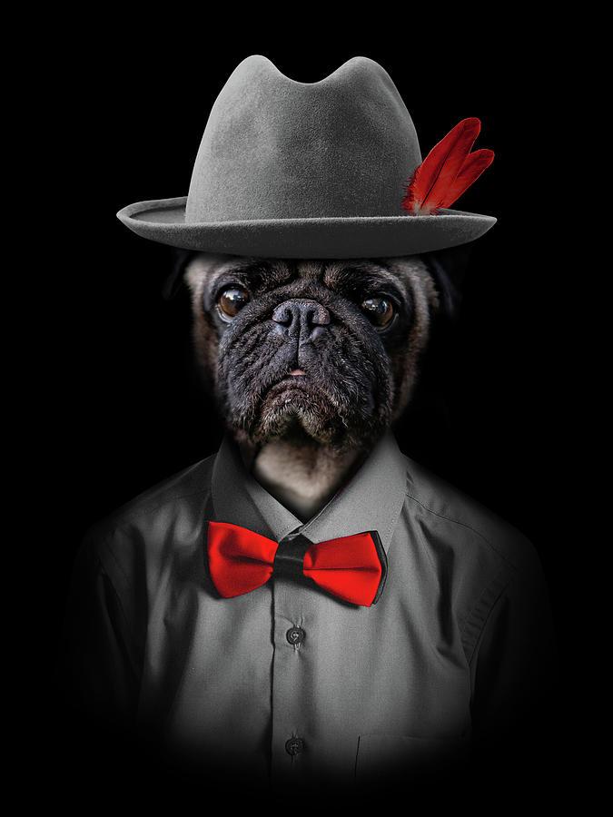 Classy Pug Digital Art