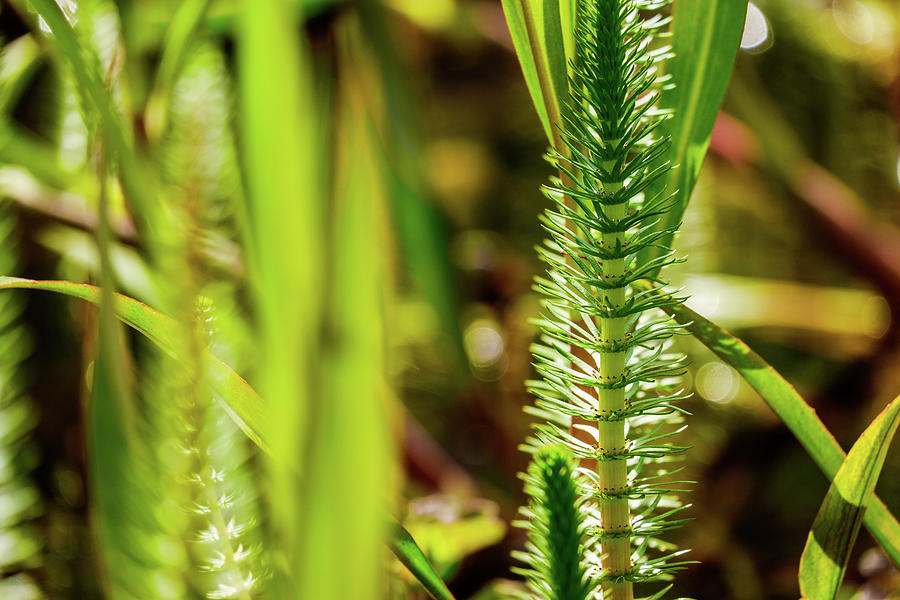 Close Up Beautiful Aquatic Plants In Garden Pond Photograph