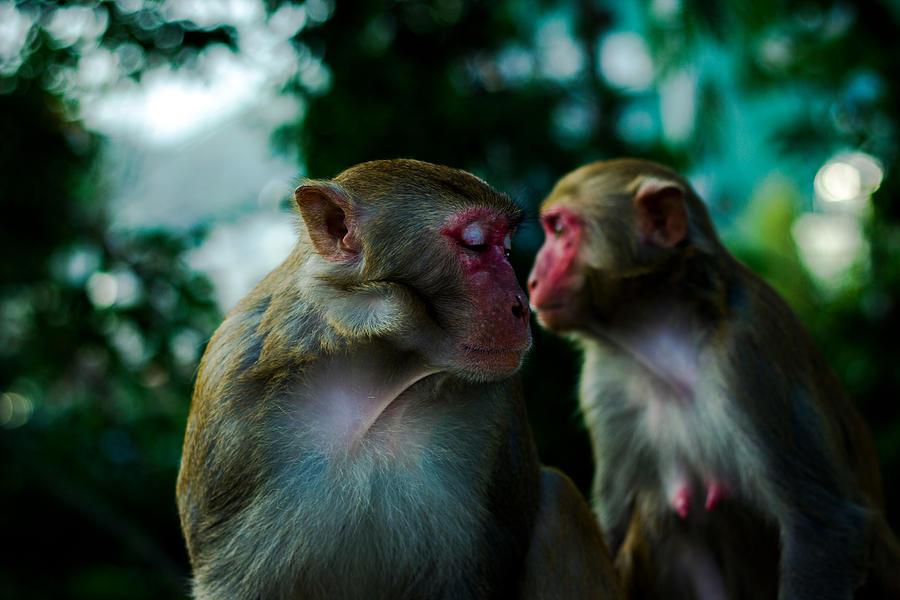 Close-Up Of Monkeys Photograph by Yingchou Han / EyeEm