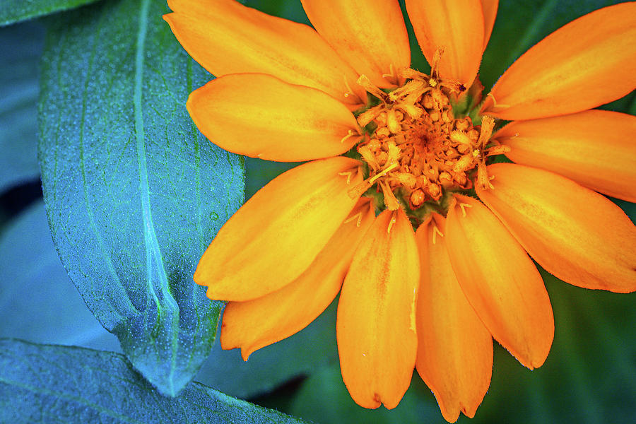 Close-up Of Orange Flower Outdoors Blooming Photograph