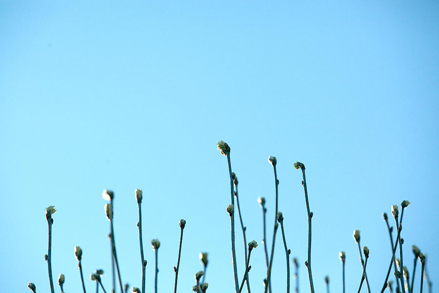 Close-Up Of Stems Against Clear Blue Sky Photograph by Paulien Tabak / EyeEm