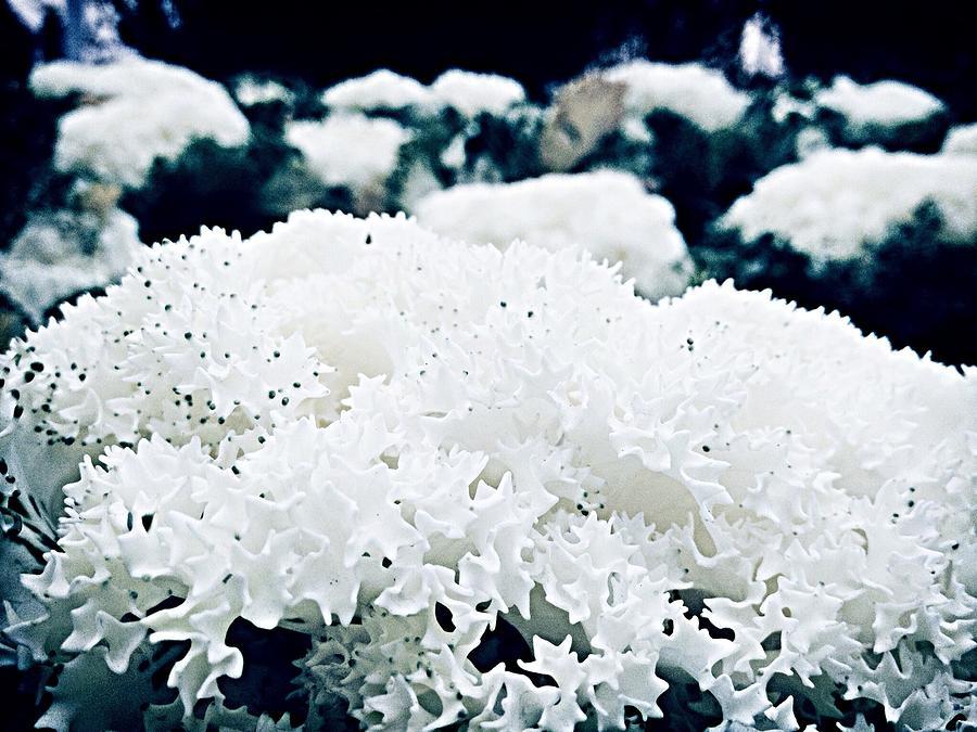 Close Up Of White Plant Photograph by Reza Rezvanzadeh / EyeEm