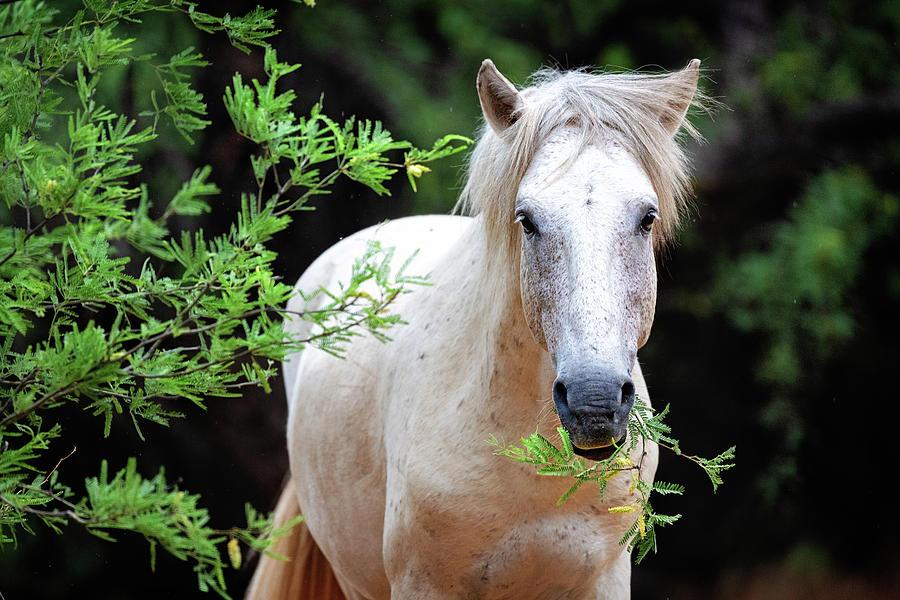 Closeup Beautiful White Wild Horse by Susan Schmitz