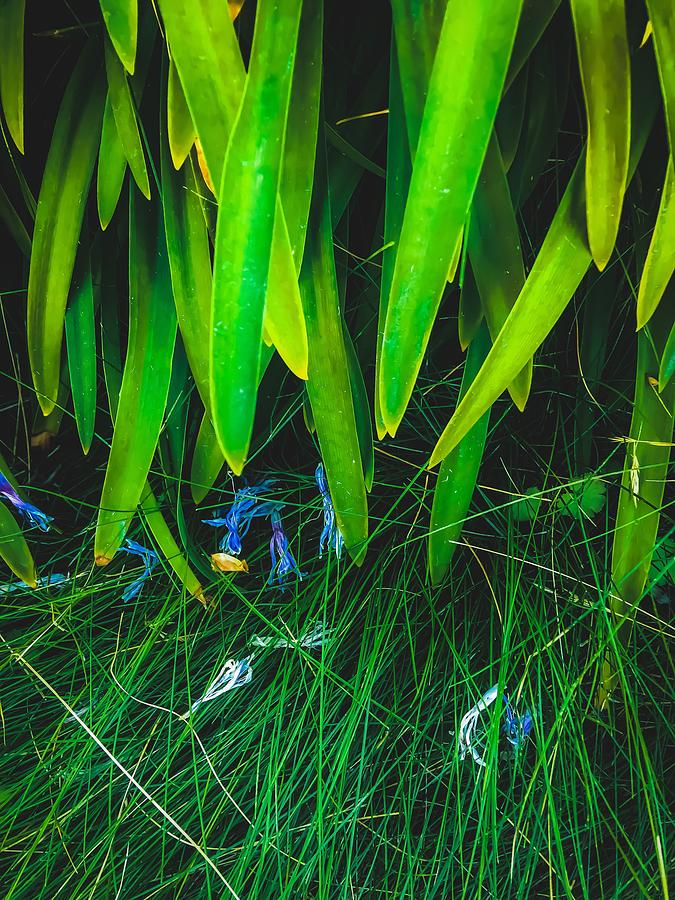 Closeup Green Leaves Plant With Green Grass Photograph