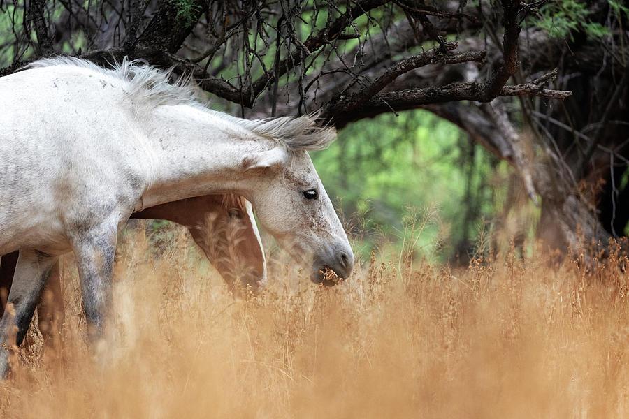 Closeup Two Beautiful Wild Horses Grazing by Susan Schmitz