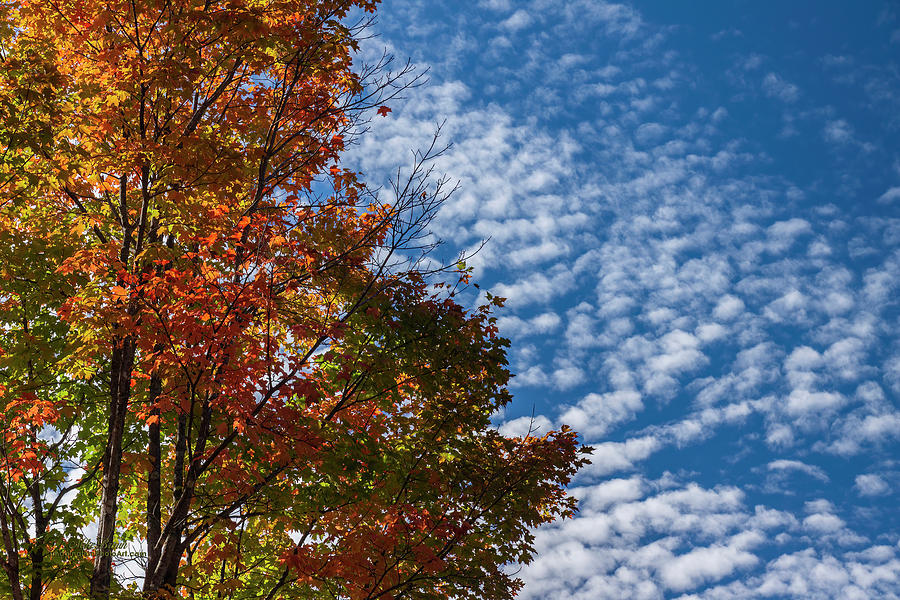 Autumn Photograph - Clouds Imitating Leaves by Mike Braun