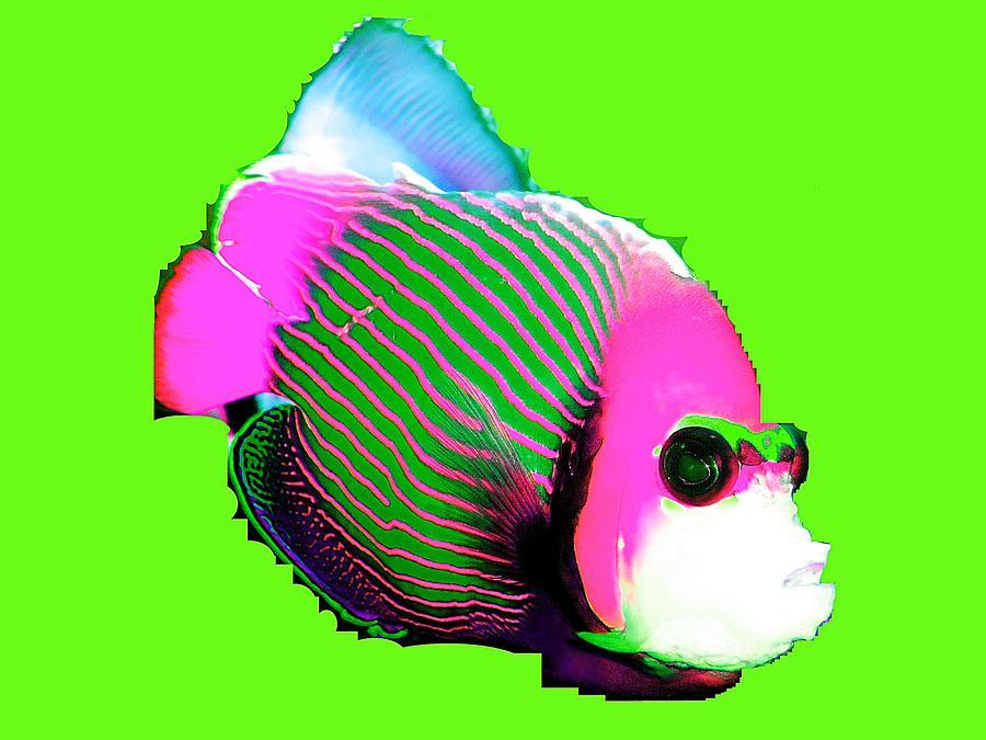 Clown Fish Mixed Media
