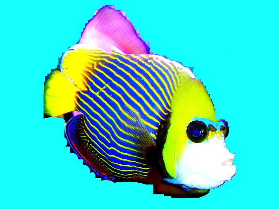 Clown Fish II Mixed Media