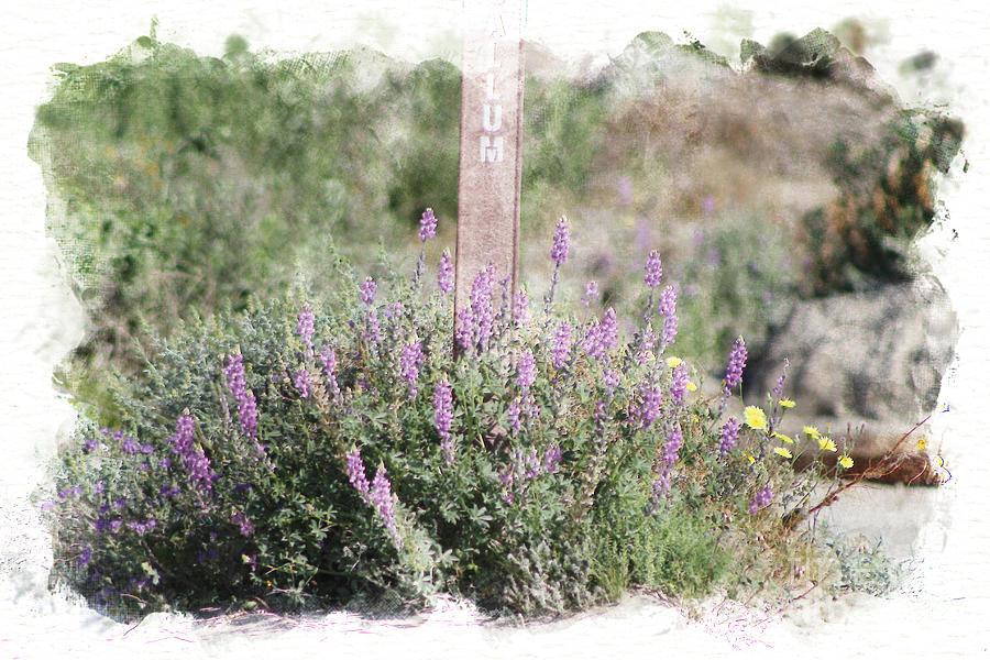 Cluster of Purple Desert Lupine Coachella Valley Wildlife Preserve by Colleen Cornelius