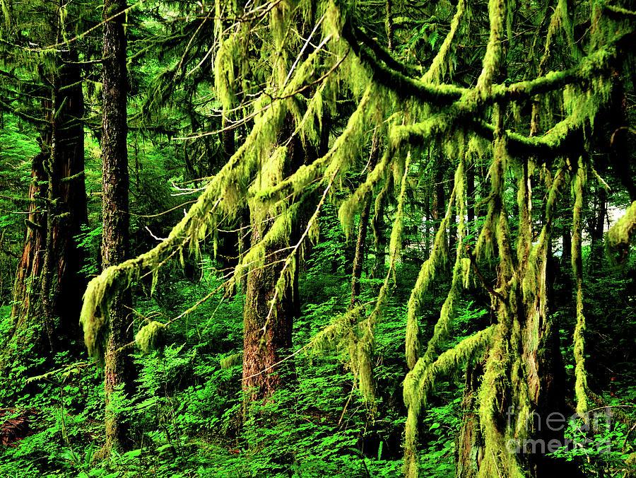 Coastal Rain Forest In Alaska Photograph