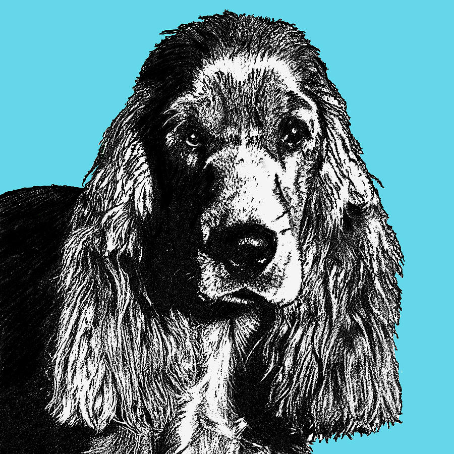 Cocker Spaniel Drawing Drawing