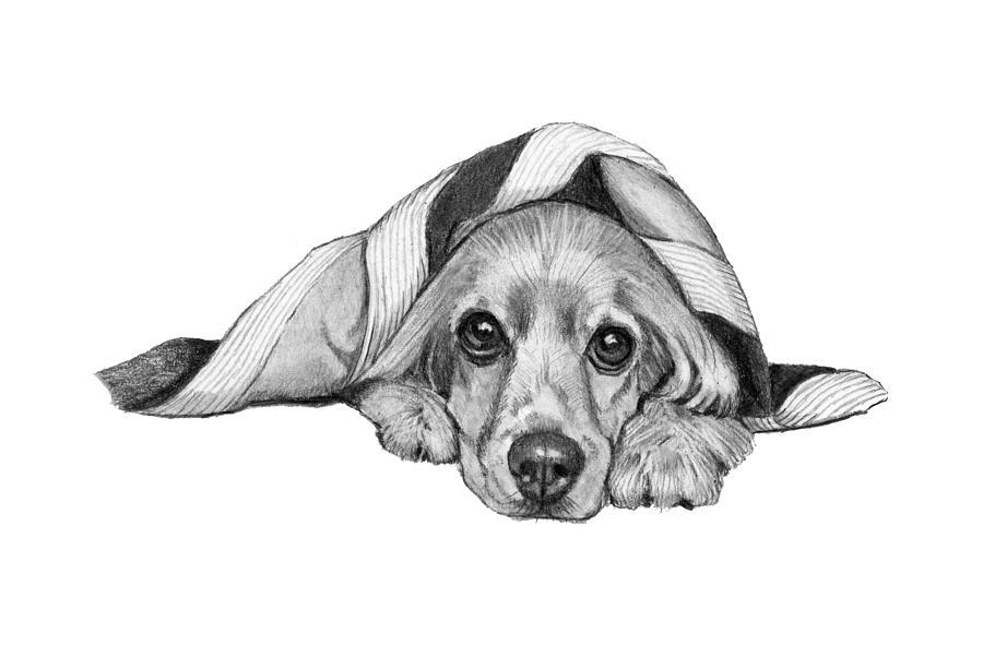 Cocker Spaniel Lying Under Blanket Drawing