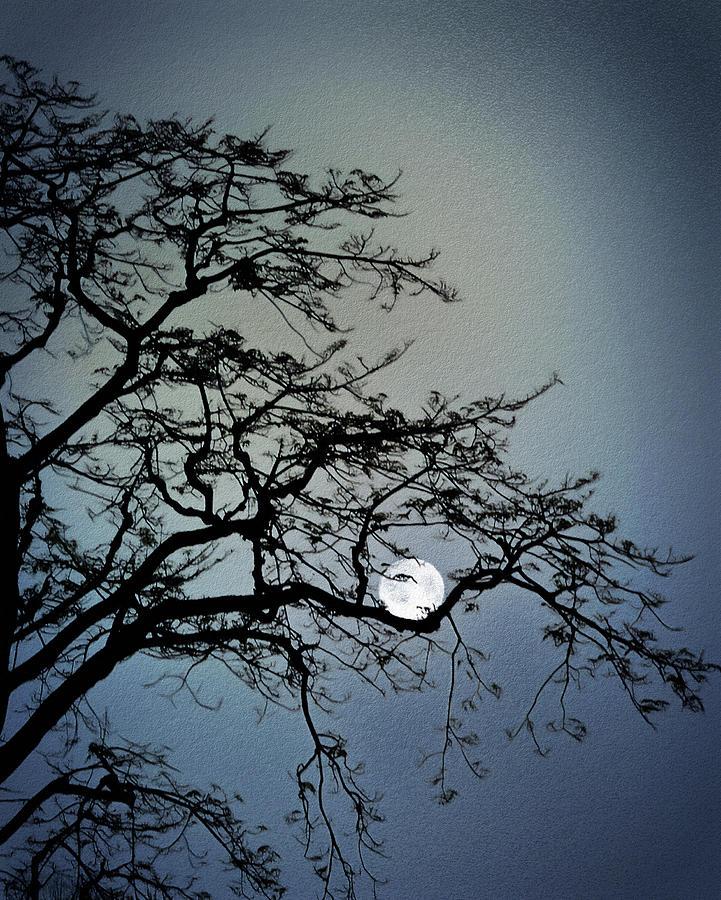 Coddled Moon Digital Art