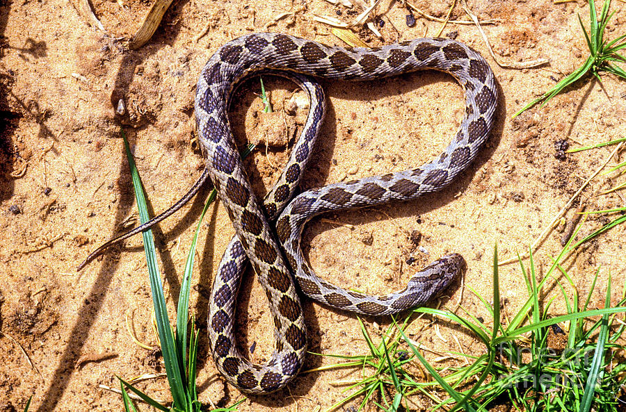 coin marked snake