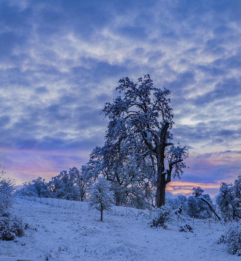 Cold Snowy Morning by Jonathan Hansen