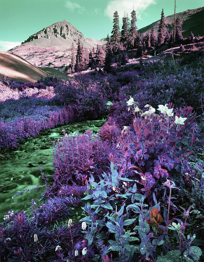 Colorado Wildflowers - Surreal Art By Ahmet Asar Digital Art