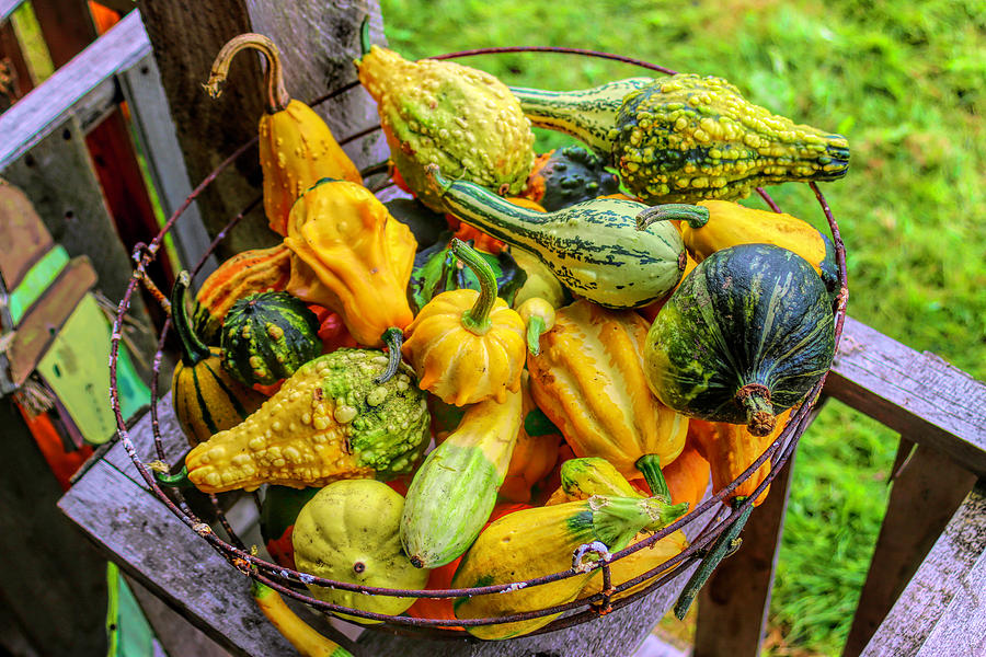 Colorful Gourds  by Cathy Anderson