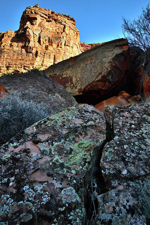 Utah Photograph - Colorful Lichens along Colorado River by Ray Mathis