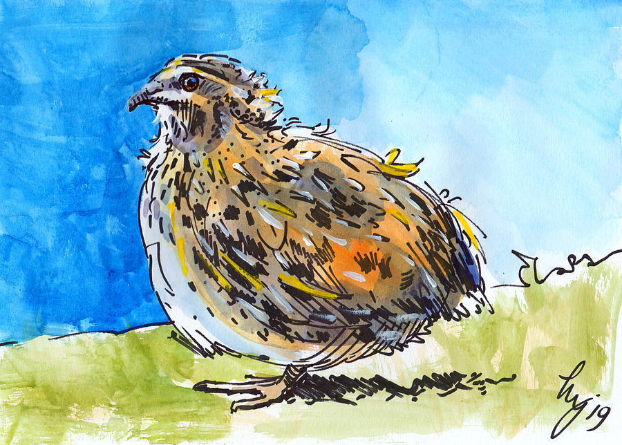 Colorful Quail Bird Painting by Mike Jory