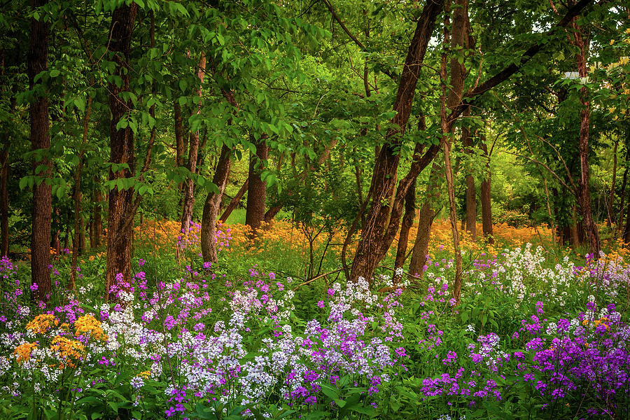 Colorful Wildflowers Photograph