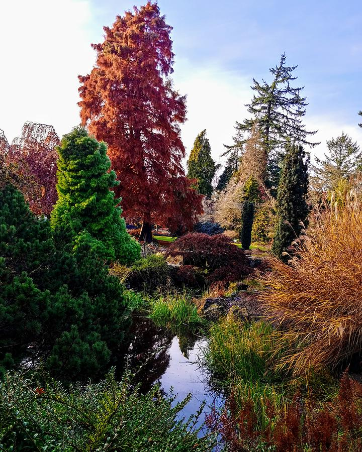 Landscape Photograph - Colors In The Park by Darrell MacIver