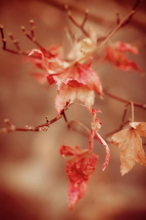 Autumn Photograph - Colors Of Autumn by Toni Hopper