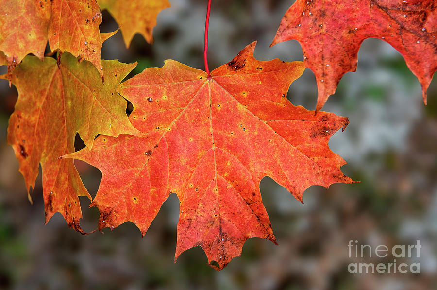 Leaves Photograph - Colour My Day by Nina Stavlund