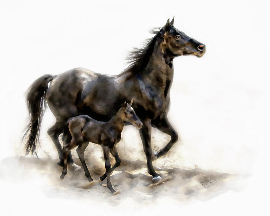 Colt And Mare Photograph