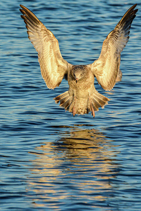 Coming in for a Landing by Dave Hilbert