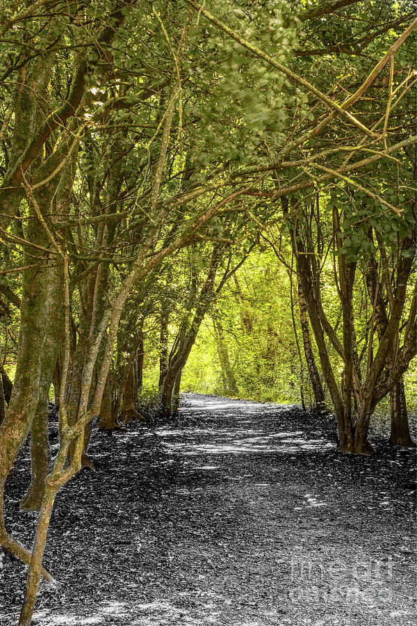 Composite Of A Tree-lined Path Photograph