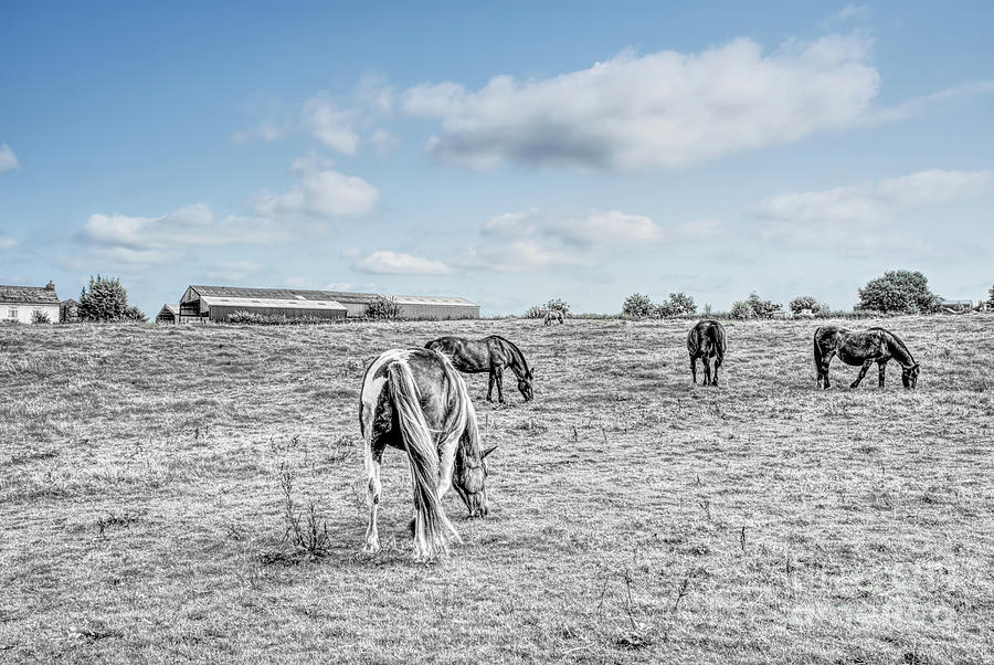 Composite Of Horses In A Field Photograph