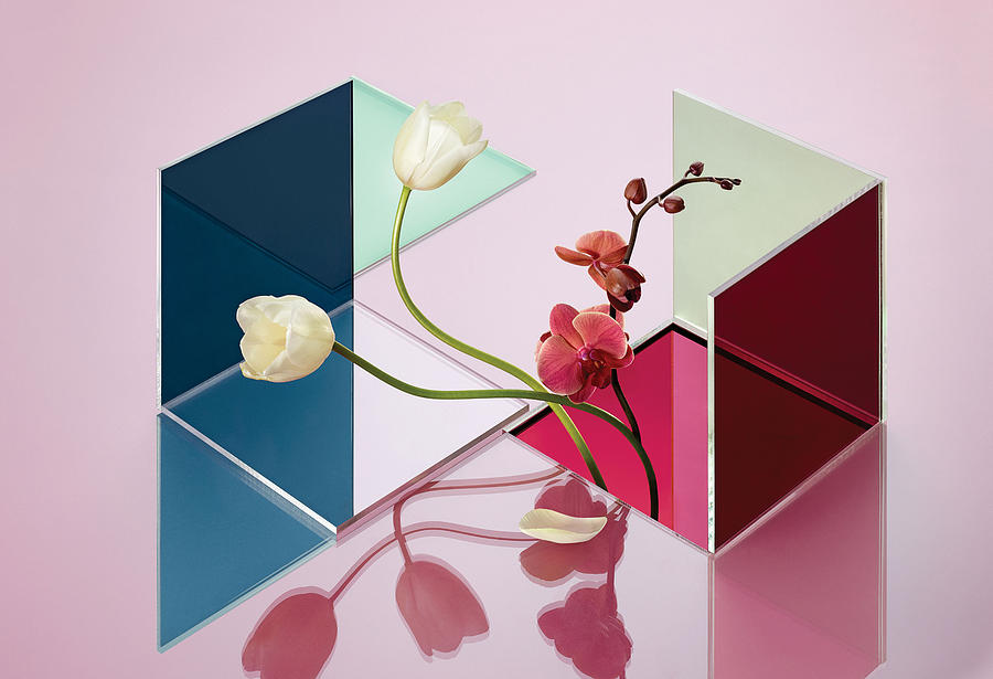 Conceptual Still Life of Flowers and Reflections Photograph by Nik Mirus