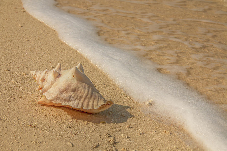 Conch Shell At The Water's Edge by Kristia Adams