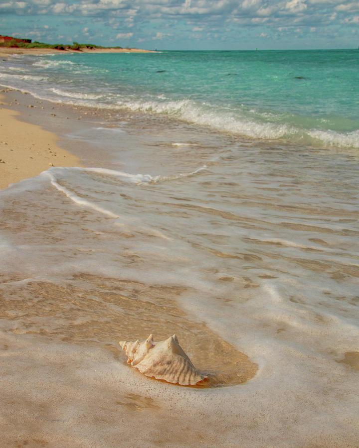 Conch Shell on Bush Key 3 by Kristia Adams