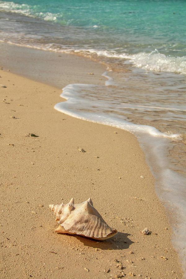 Conch Shell on Bush Key  by Kristia Adams
