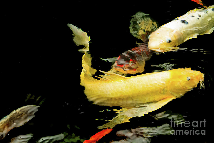 Fish Photograph - Congregation by Marilyn Cornwell