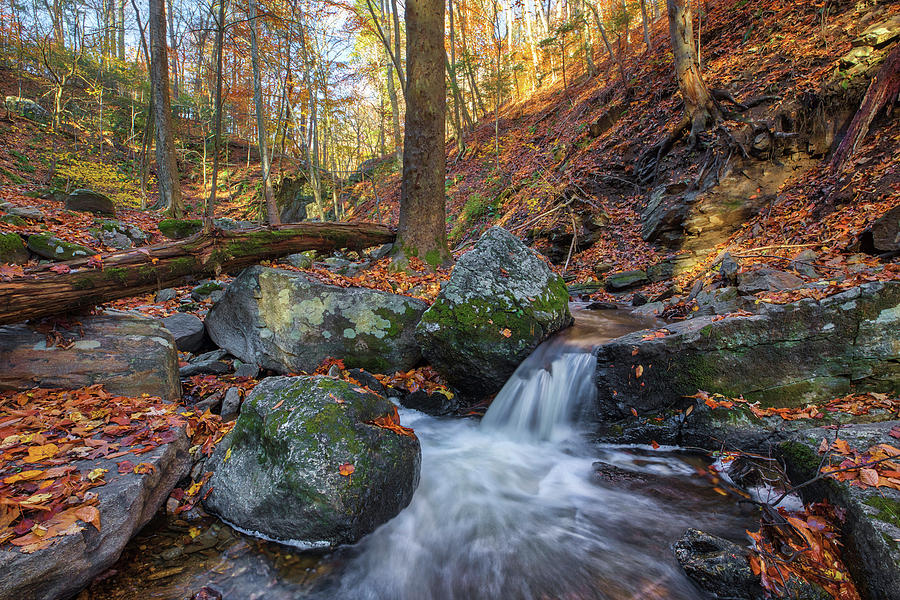 Connecticut Fall Scenery at Indian Well State Park  by Juergen Roth