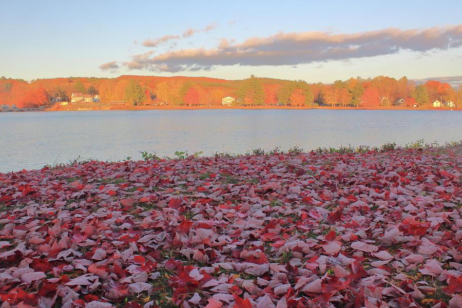 Connecticut River Leaf Drop Photograph