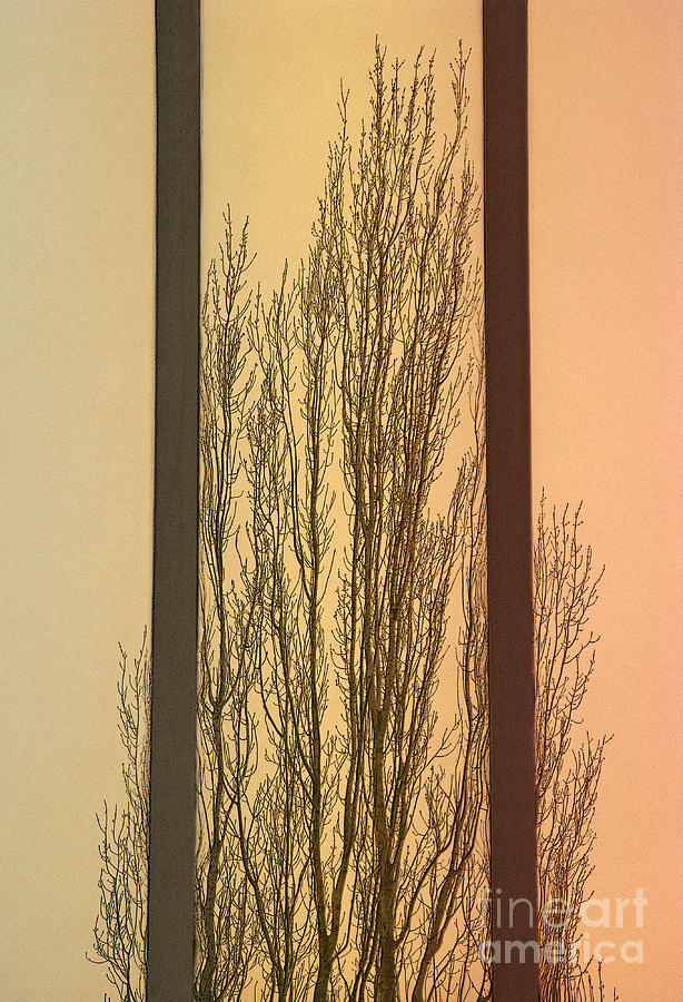 Convergent Photograph