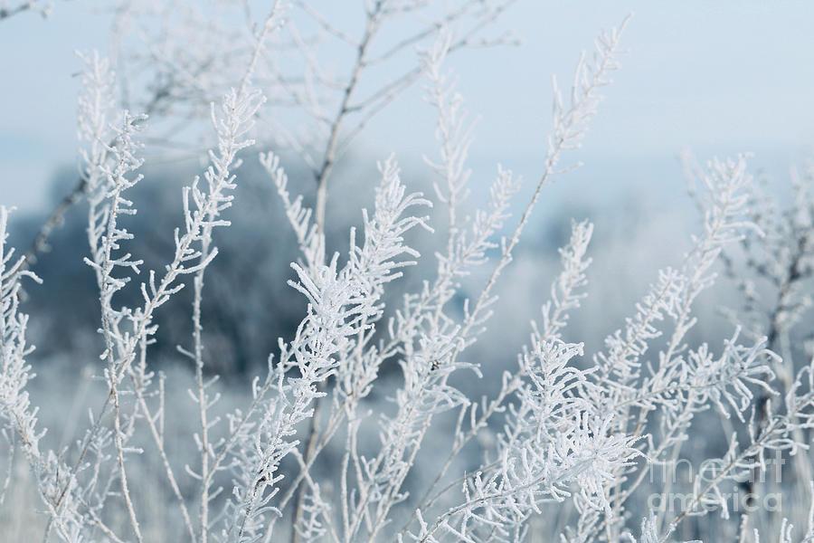 Cool Blue Frost by Carol Groenen