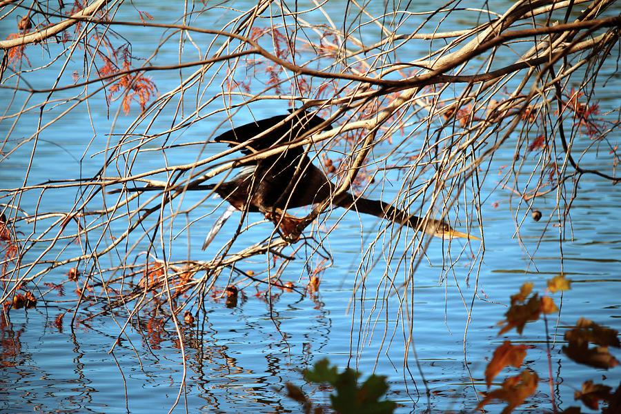 Cormorant Hiding Spot by Cynthia Guinn