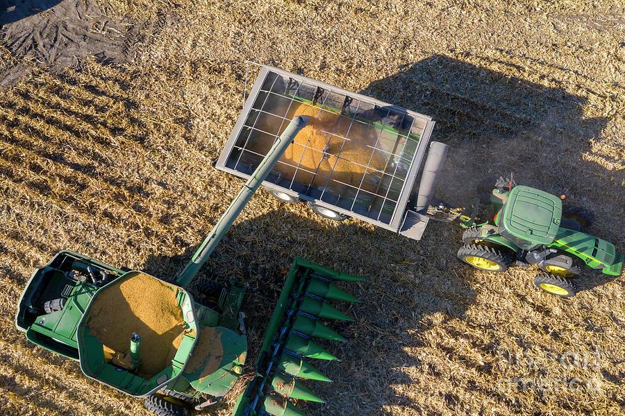 Corn Harvest Photograph