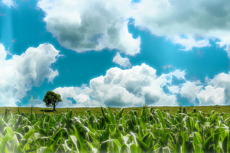 Cornfield Horizon Photograph