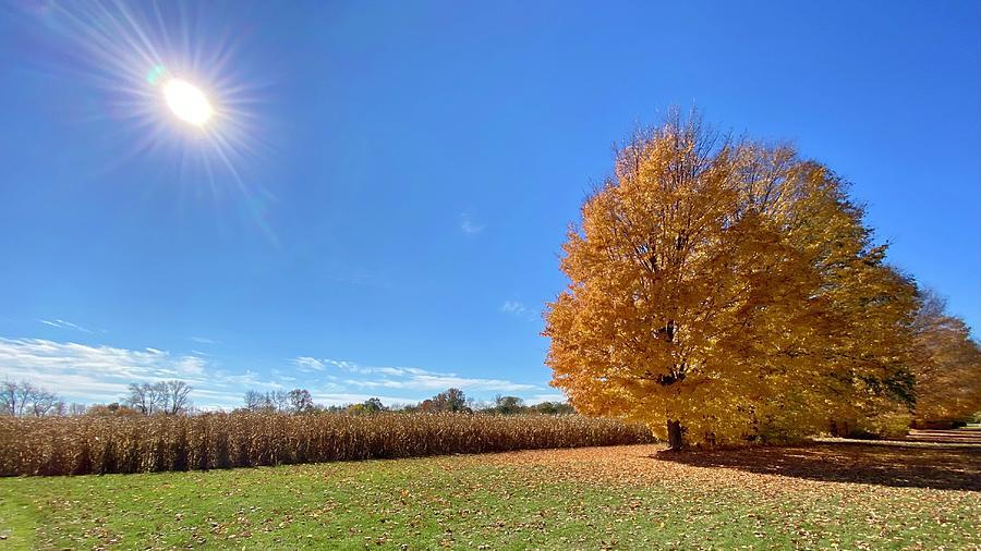 Cornfield In Autumn Photograph