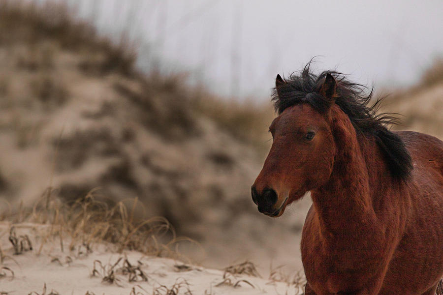 Corolla Wild Horse by Pete Federico
