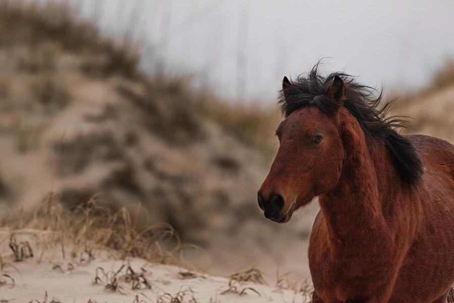 Corolla Wild Horse by Pete Federico